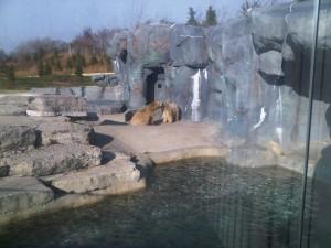 Polar Bears exchange a tender moment
